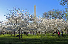 File:220px-Cherry Blossoms and Washington Monument.jpg